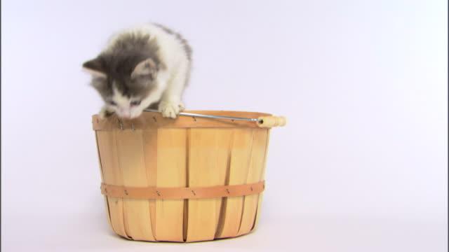 Kittens playing in basket