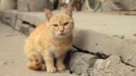 LS Kitten/xian,shaanxi,China