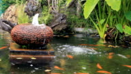 Koi fish in pond at backyard