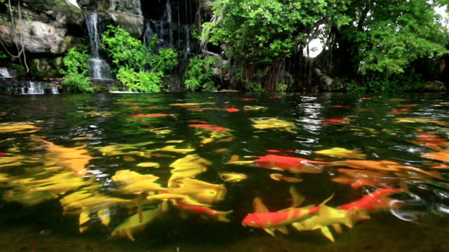 how to get fish to stock a pond