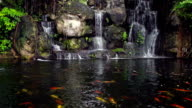 Koi fish swim in the waterfall