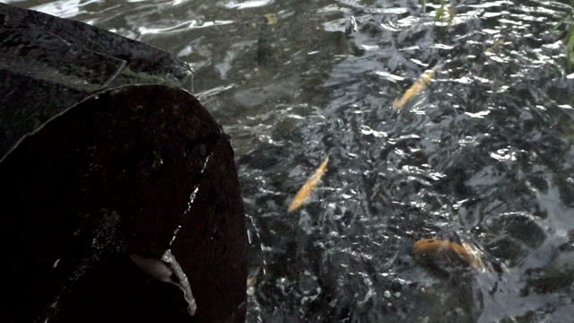 HD: Koi pond with watermill