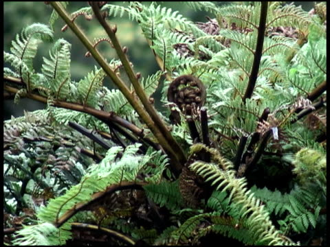 Koru Fern Frond:  Symbolizes Growth, New Life, Strength, Peace