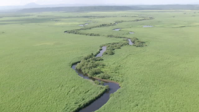 AERIAL, Kushiro Wetlands National Park In Summer, Hokkaido, Japan