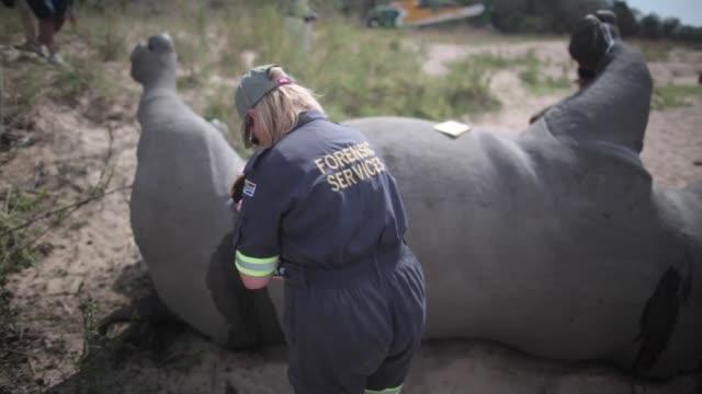 La masacre de rinocerontes se ha agravado en Sudafrica con 1215 animales muertos a manos de cazadores furtivos el ano pasado anuncio este jueves el...