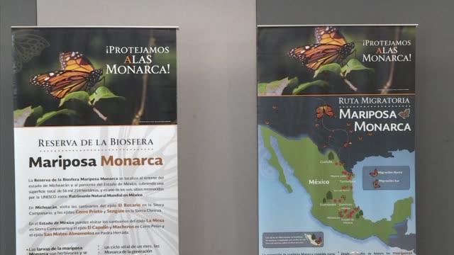 La superficie de hibernacion usada por la poblacion de mariposas monarca decrecio mas del 25% en Mexico debido al clima frio causado por el cambio...