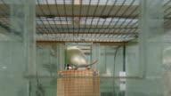 Lab rat exploring