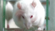 Lab rat washing