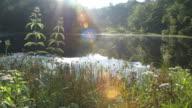 Lake & lens flare through foliage & trees at sunrise