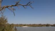 Lake and Flamingos  in Parc Naturel Régional de Camargue