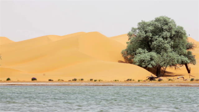 Lake in Tengger Desert/Alashan, Inner Mongolia China.