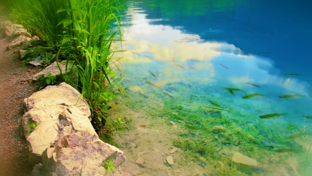 Lake with fish