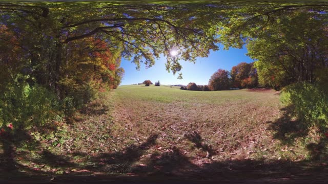 360VR landscape 4k video autumn forest with clearing
