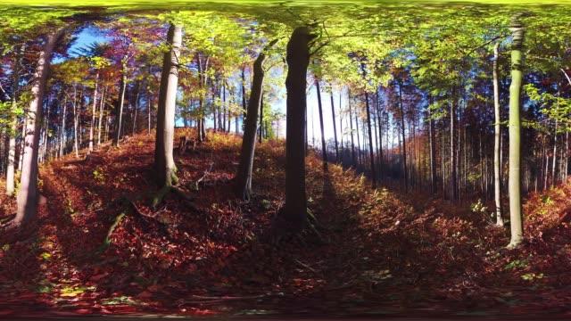360VR landscape 4k video autumn in european forest