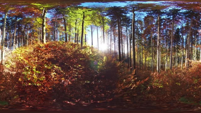 360VR landscape 4k video sunny autumn in hilly forest