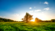 Landschaft eines wunderschönen grünen Feld bei Sonnenuntergang