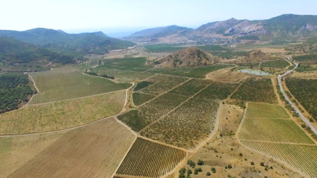 AERIAL: Landscape of farmland with vineyards