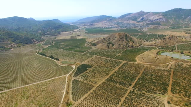 AERIAL: Landscape of farmland with vineyards