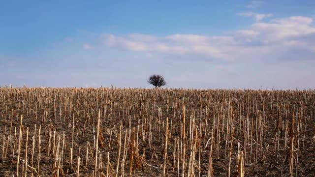 Landschaft mit trockenen field