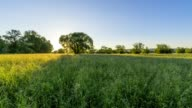 Landscape with meadow at sunrise, Kahl am Main, Bavaria, Germany