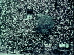Large antiwar promoratorium in Vietnam demonstrations / crowd marching at night in Washington DC activist Coretta Scott King marching with candle /...