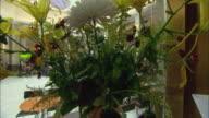 CU Large bouquet of flowers / Basel, Switzerland