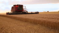 WS PAN Large Combine Harvesting Wheat in Field / Oyster, Virginia, USA