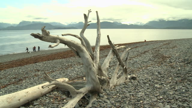 'Large driftwood on pebble beach near Homer, Kenai Peninsula, Alaska, view across Kachemak Bay looking towards Kachemak Bay State Park and Wilderness Park, with snow topped mountain range, small boat passes left to right.'