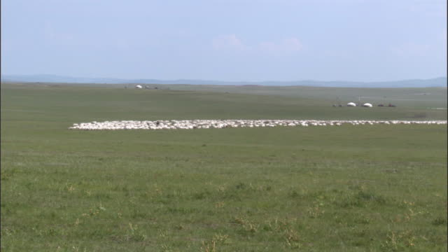 Large flock of sheep on steppe, Inner Mongolia, China