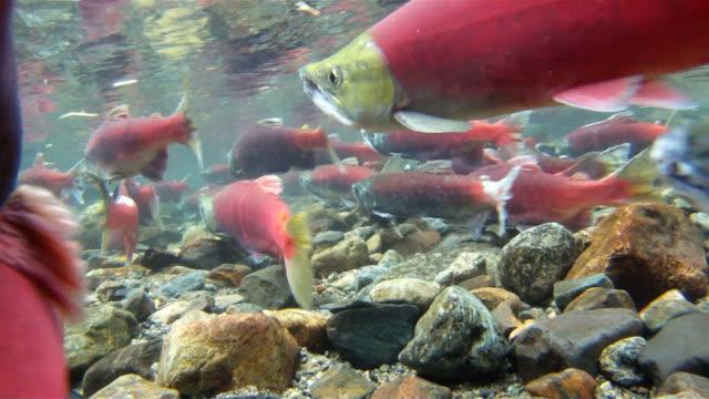 Grande gruppo di pesci