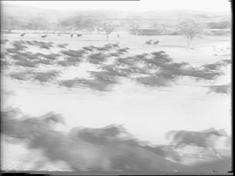 A large herd of horses stampede over a hill / horses race past a mounted soldier in the wilderness / montage of herd of horses stampeding over hills
