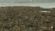 A large mass of seaweed gathers on the shoreline of a beach in Iceland.