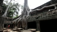 WS Large tree and roots growing  over ruins at Ta Prohm / Siem Reap, Siem Reap, Cambodia