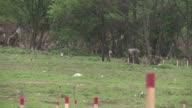 Las inundaciones historicas en Bosnia amenazan con desenterrar las minas antipersonas que aun permanecen en varias zonas del pais desde la guerra de...