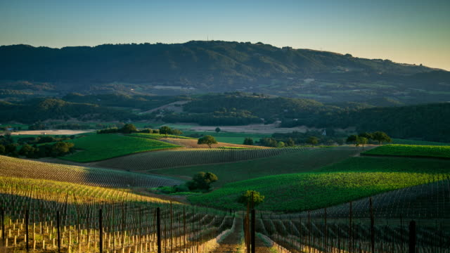 Late Afternoon in Wine Country Timelapse