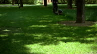Lawn mowing in a park