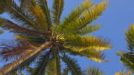 Laying on a beach, looking up at coconut palm trees