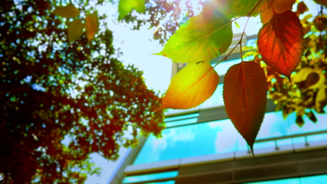 Leaf and business building