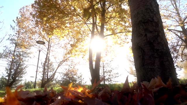 De daling van het blad in de herfst stadspark