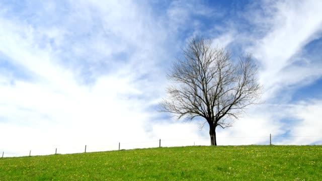 Leafless tree in spring, Allgau, Bavaria, Germany