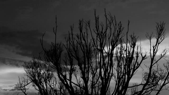 Bladloos Boom silhouet