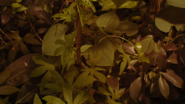 Leaves and climbing plants grow in a forest. Available in HD.