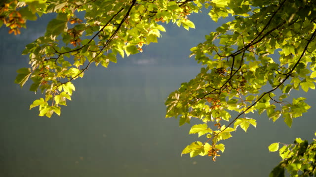 Leaves with caustic reflections 1