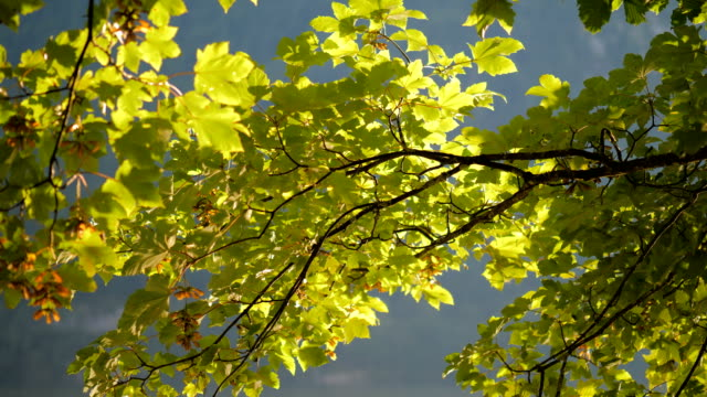 Leaves with caustic reflections 2