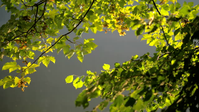 Leaves with caustic reflections 3