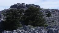 Lebanon : Cedars of Lebanon