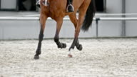 SLO MO DS Legs of chestnut horse running in arena
