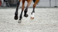 SLO MO Legs of horse running in arena with rider