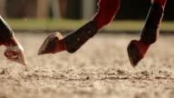 SLO MO TS Legs of running horse wearing fetlock protector