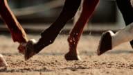 SLO MO TS Legs of three horses walking in sunshine